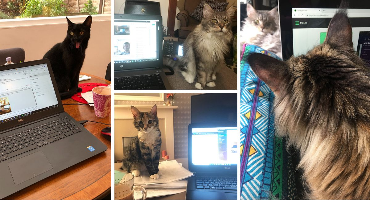 M12 employees working from home on emergency day